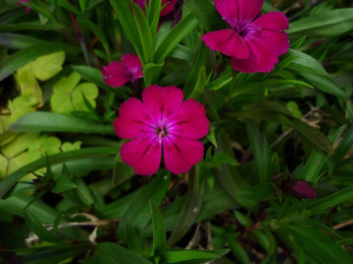 2018.3.15 春の花 (3)