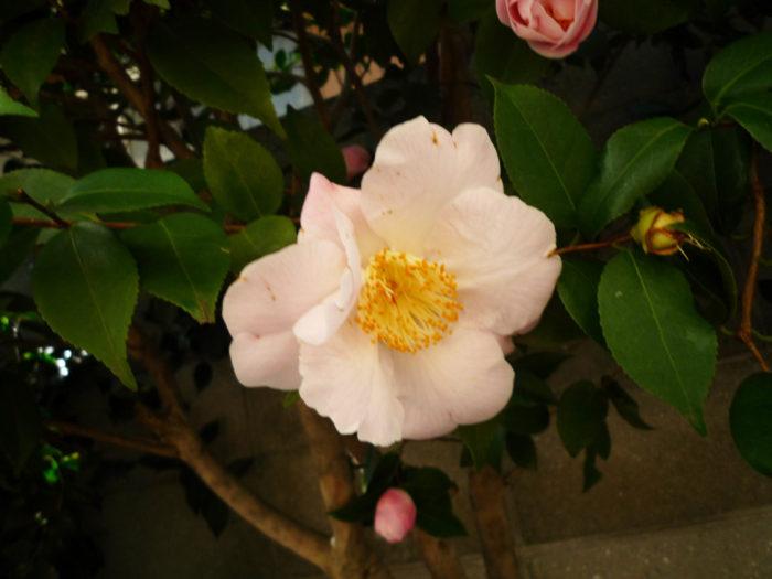 2018.3.30 春の花 (2)
