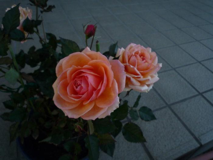 2018.3.4 春の花 (4)