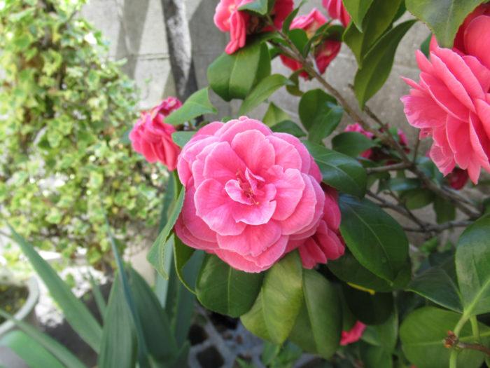 2018.4.20 季節の花 (39)