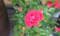 春の花が咲きました🌷