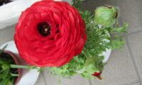 媛の華の花